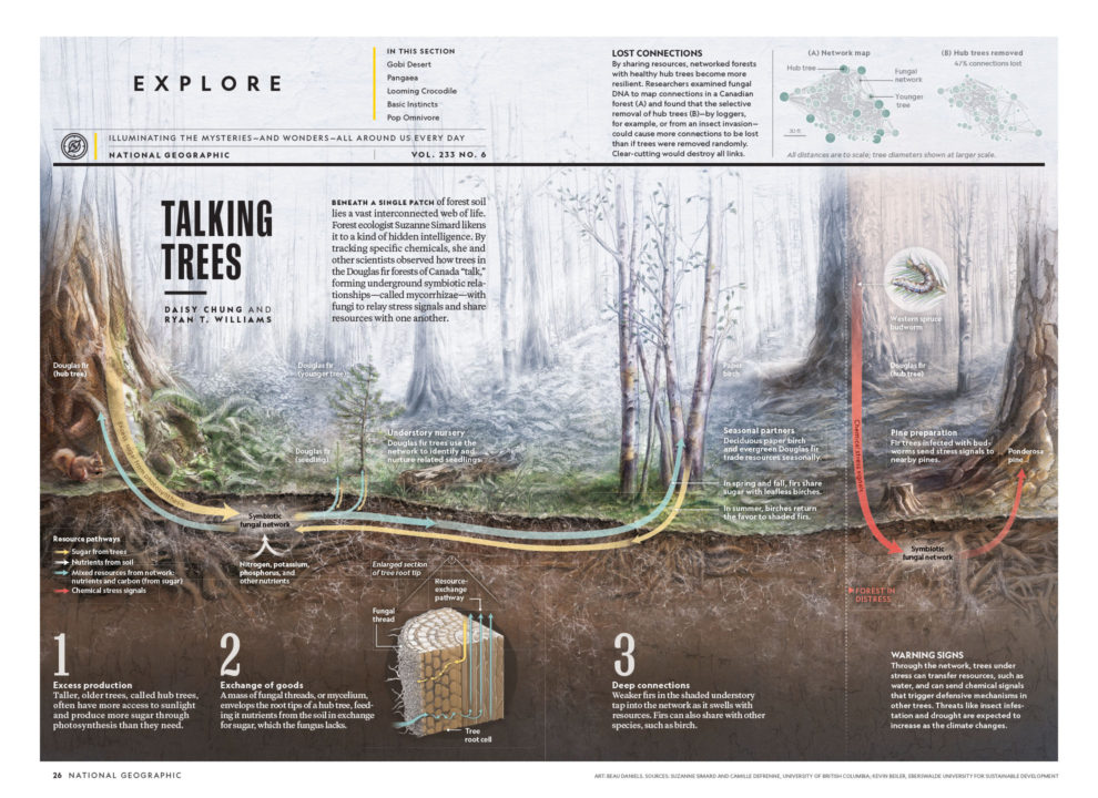 National geographic january 2019